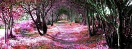 15 Breathtaking Tree Tunnels & Canopies
