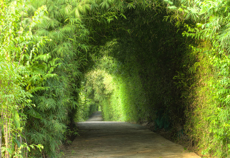 garden-green-tunnel