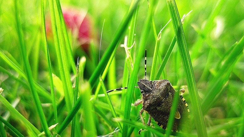 Natural Insect Repellent 3 Pleasant Plants To Keep Bugs At Bay