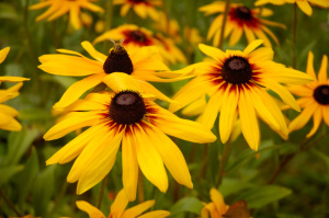 5 Common Daisy Flowers That Are Perfect for Beginning Gardeners