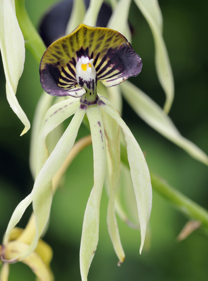 The Different Types Of Orchids Garden Lovers Club