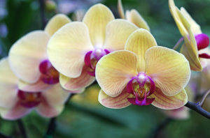 Different Types of Orchids (Photos)