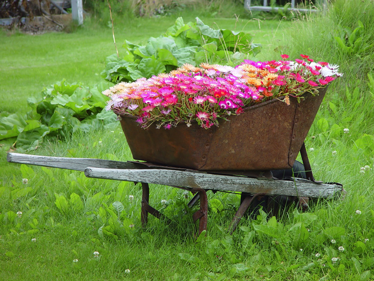 wheelbarrow planter 01