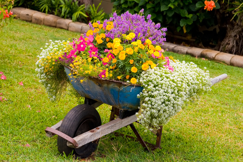 wheelbarrow planter 02