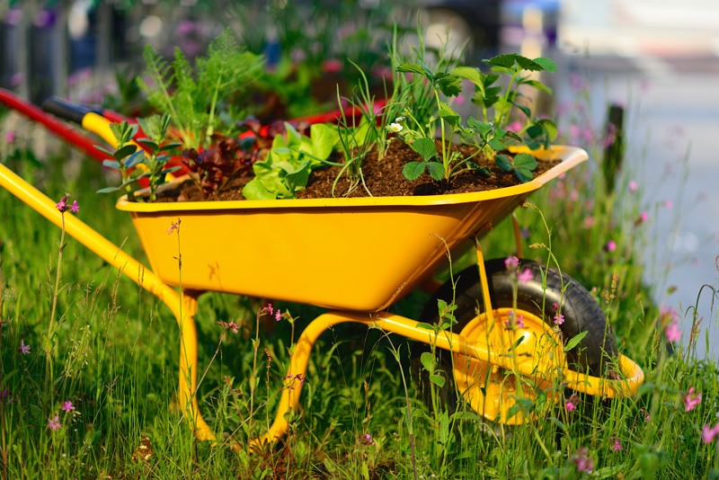wheelbarrow planter 04