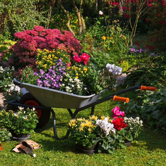 wheelbarrow planter 06