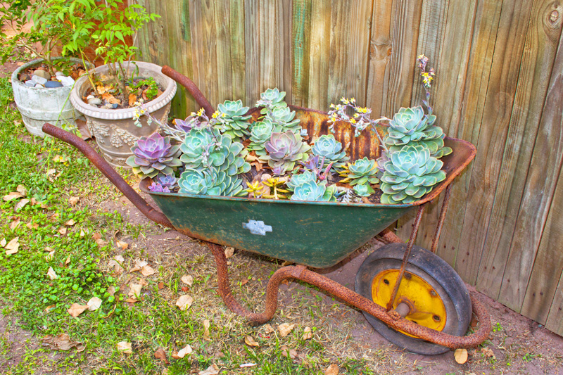 wheelbarrow planter 10