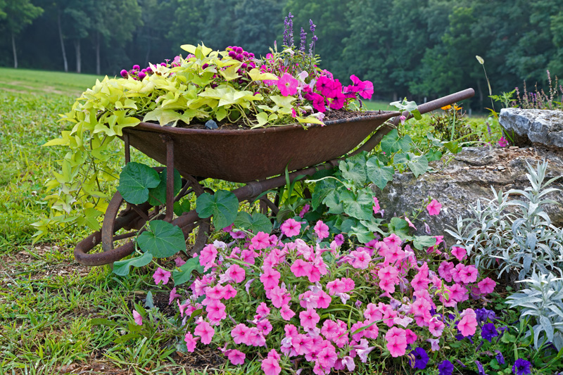 wheelbarrow planter 11
