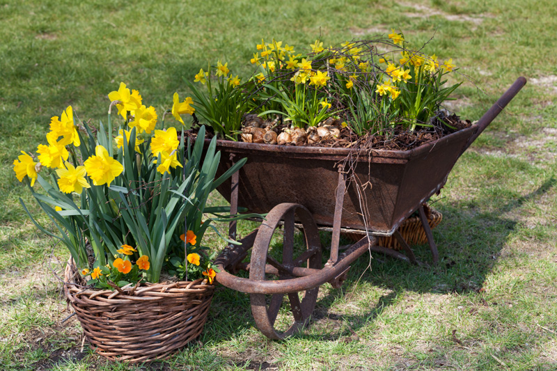 wheelbarrow planter 12
