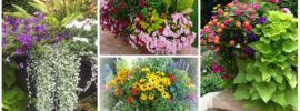 Container Gardens: 8 Fantastic Ideas