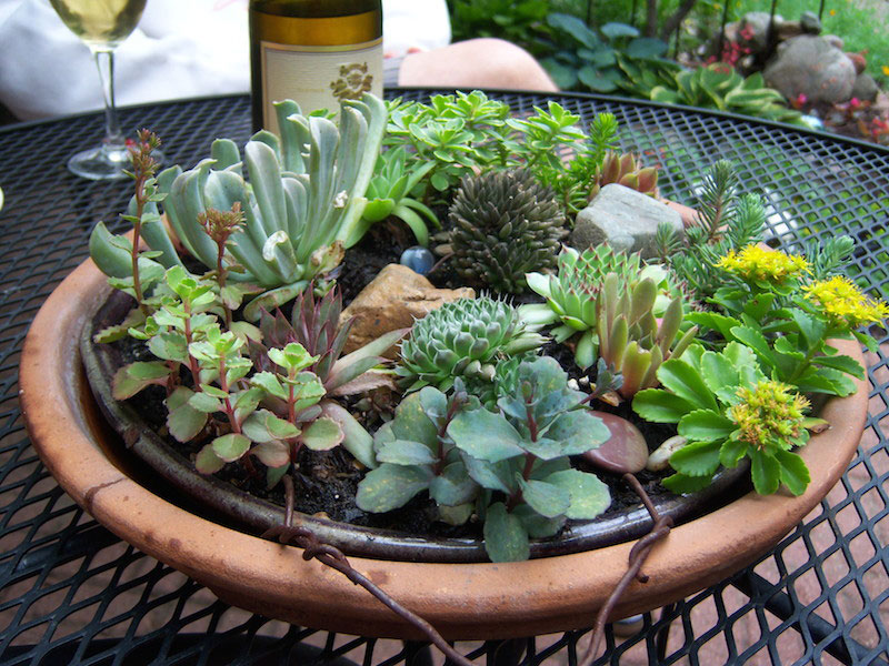 succulent bowl planter