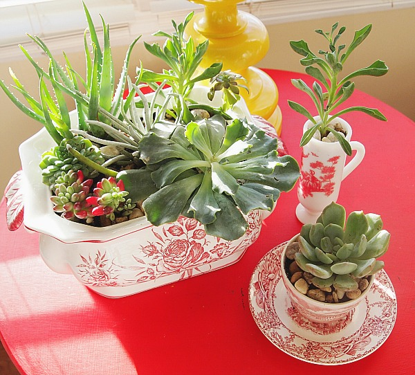 25 Indoor and Outdoor Succulent Gardens Of All Sizes ...