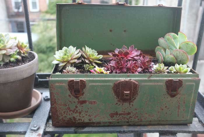 toolbox succulents