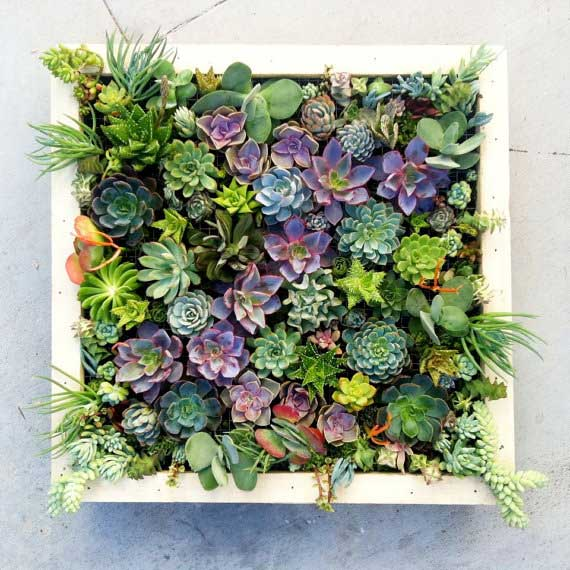 wall succulent planter