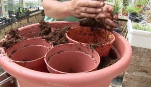 Brilliant Container Gardening Tip (Video)