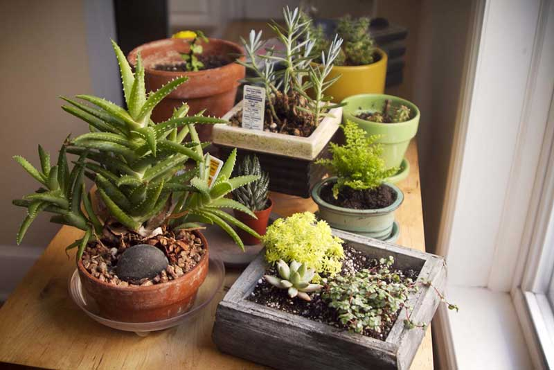 succulent window garden
