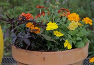 Tips-Container-Gardening