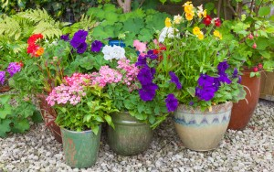 Video: Tips on How to Choose and Combine the Best Plants for Your Container Garden