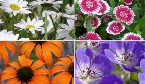 (Video) The Perfect Flowers for Your New Perennial Garden