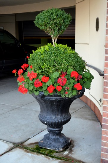 13 Topiary Planter Ideas That Will Have You Priming Your