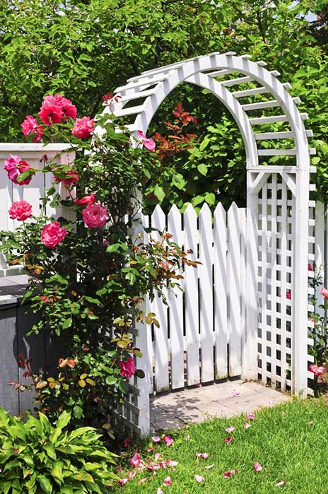 What we love most about this pairing is the exquisite contrast between bright pink roses, dark green foliage, and the pristine white of the trellis archway itself. The flowers appear in just the right amount to catch the eye, but not overwhelming.
