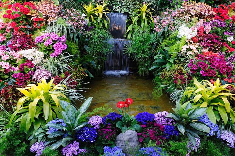 Surrounding this backyard garden pond and waterfall feature is an absolute cornucopia of gorgeous flowers. We've got Coleus in burgundy, Gerbera daisies out front, pink germaniums, ageratum in purple, spider plant hanging its long leaves, plus some ivy in the way back that helps frame the entire presentation.