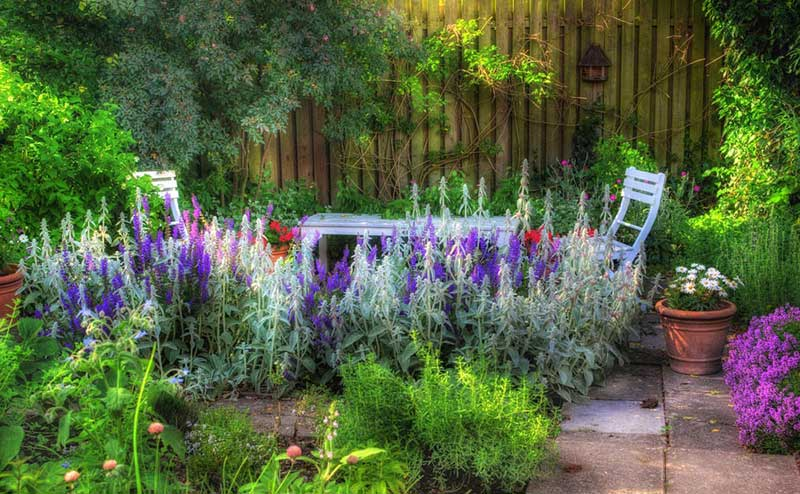 In a cozy backyard garden flush with rich greenery from the ground on up the fence, we see a splash of salvia bursting at the center. The soft hues add contrast and attraction to this space, perfect for lounging in the shade with beautiful surroundings.