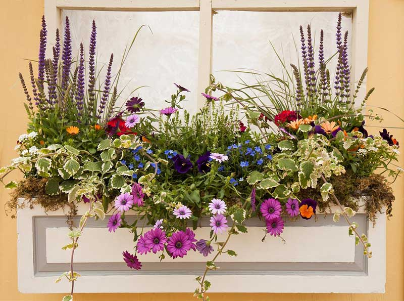 If you love container gardening, you'll want to pick the right flowers for the right size. This gorgeous window planter is the perfect space to plant daisies and violets, making a colorful splash right outside your home that can be appreciated both indoors and out.