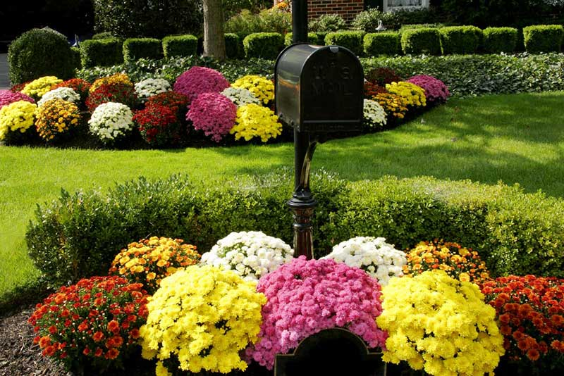 We absolutely love the idea of putting some of our favorite flowers up front and out in the open for everyone to appreciate. Surrounding the mailbox with a burst of color is one of the simplest and most effective ways to change the entire look of your landscape from the street view.