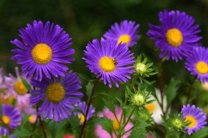 17 Gorgeous Fall Flowers To Include In Your Garden