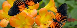 Butterfly Gardening: Learn Which Perennials and Annuals Attract Butterflies