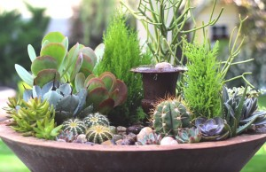 How to Create a Stunning Succulent Fountain Arrangement