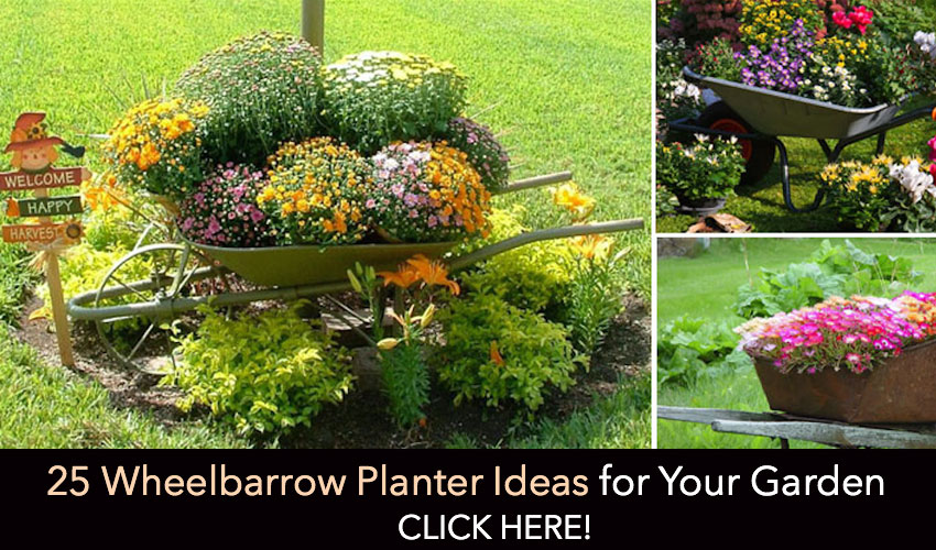 WheelbarrowPlanters