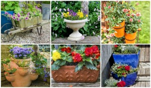 21 Varied Ideas To Inspire Your New Container Garden