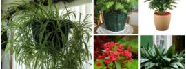 23 Easy to Grow Houseplants