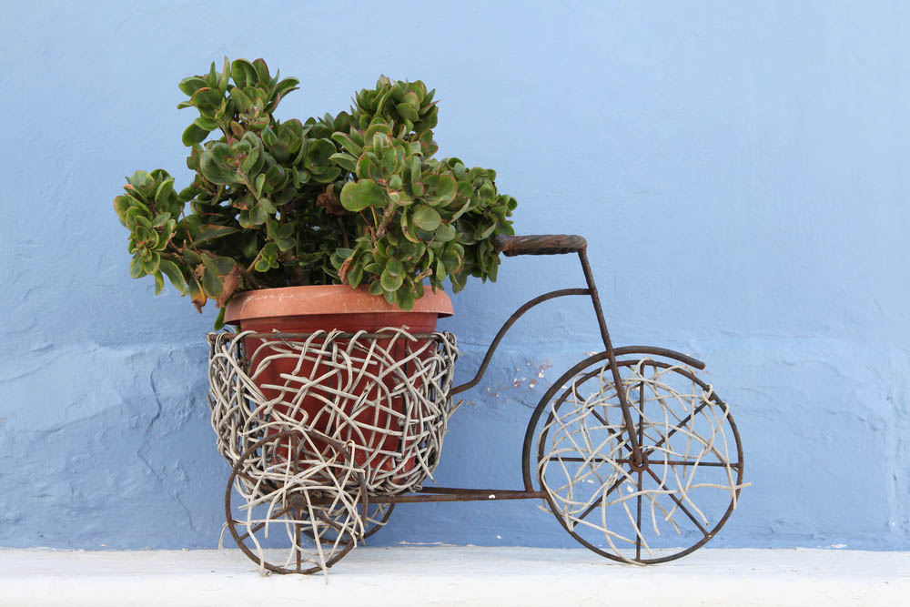As seen above, stuffed with a massive succulent, this rustic styled tricycle sculpture features an accent of woven fibers in all the right places. Spanning the wheels as well as wrapping the container frame, the weaving takes the presentation to the next level. This design is a sculpture rather than an old functioning tricycle, but it justifies its cost with an attractive presence in any garden.