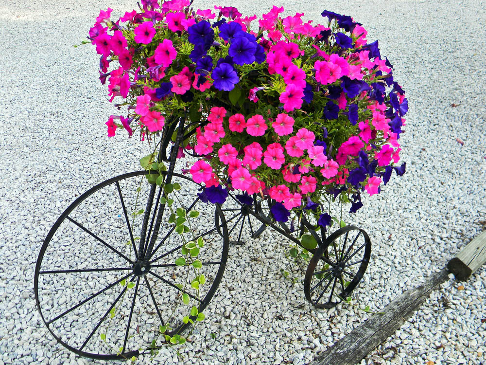 Here's another premade purchase, sacrificing that DIY caché for a spectacular look that can't exactly be found in the real world of tricycles. This black metal sculpture was shaped like one of those old-timey big wheel bikes you see in Sherlock Holmes movies, the kind that seem ten feet tall and scary to ride. It makes for the perfect accompaniment to a set of boldly colored flowers, a sort of Victorian era container garden display.