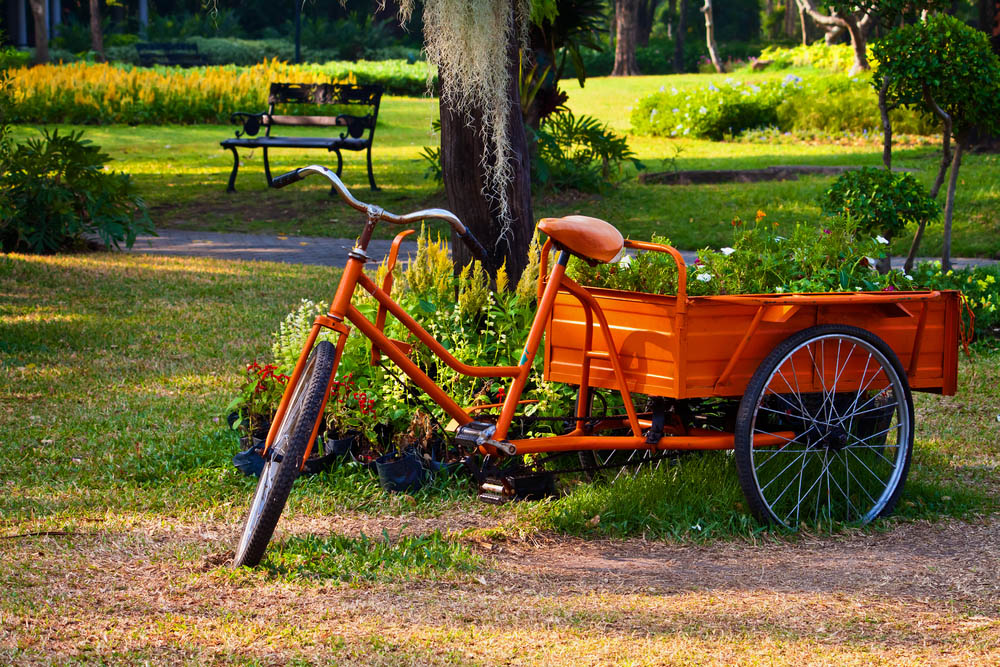 When most folks think of a tricycle, they picture the kind made for small children, with a big wheel in front. It's a smaller thing. But we shouldn't forget that tricycles come in all sorts of sizes, including models like the handy, handsome orange trike above. In this case, it's a fully functioning modern tricycle that happens to be used as a portable container garden. It's like having a wagon that you can pedal, and it's an attractive, albeit temporary way to display your plants all summer.