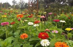 3 Ways to Help Your Flowers Bloom All Season