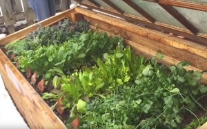 Great Tips on Building a Cold Frame