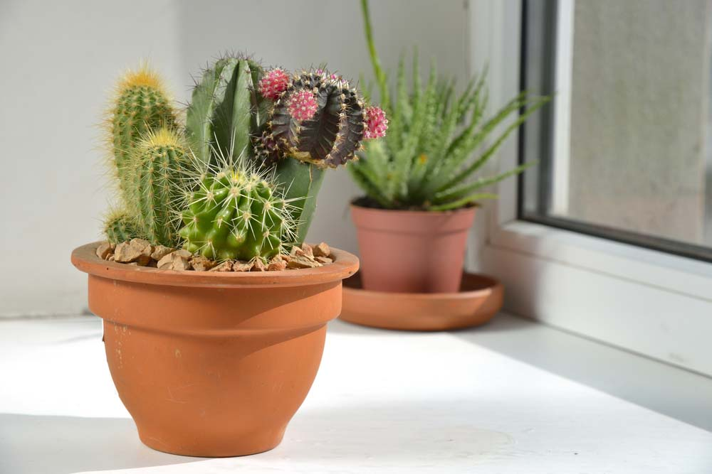 Cacti come in a lot of varieties, but they are all drought resistant, so they're great for those gardeners that have a tough time remembering to water their plants. Due to the wide variety of cacti available, they look great in strawberry planters. You can easily find larger or smaller varieties that will fit into the wide mouth and small pockets of the planter.