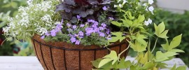 How Many Plants Should You Plant in a Hanging Basket?
