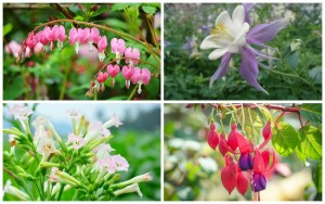 11 Gorgeous Plants for Shady Borders