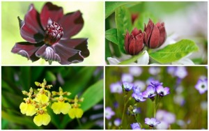 10 Gorgeous Plants That Will Make Your Garden Smell Like Chocolate