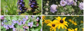 15 Nifty Plants Rabbits Won't Eat: Defend Your Garden!