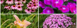 15 Pink Plants That will Look Amazing in Your Garden