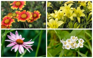 10 Perennials That Mock Heat and Drought