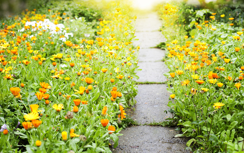 garden-path-stepping-stones-10