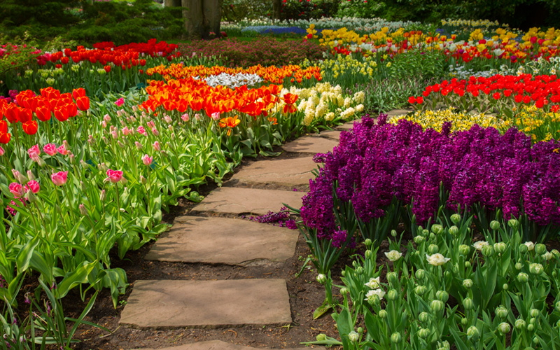 garden-path-stepping-stones-11