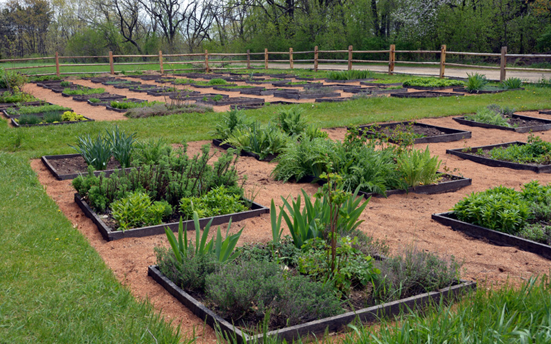 raised-wooden-plant-beds-01